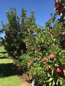 Apple Picking Core Cider House