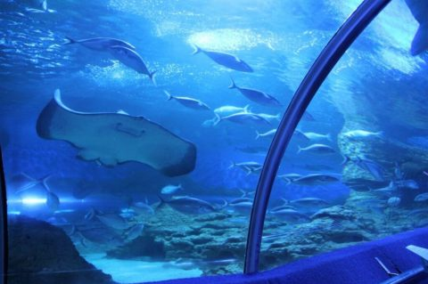 Top Season Passes for Family Attractions in Perth