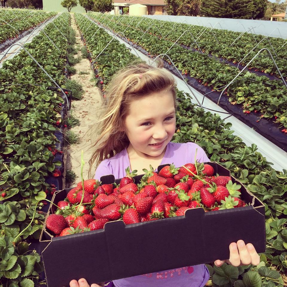 strawberry picking perth