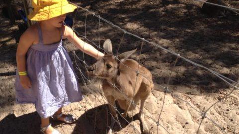 Animal Farms, Perth