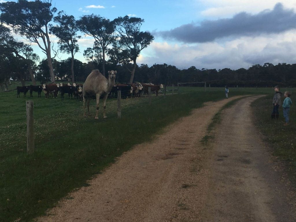 Taunton Farm, Cowaramup