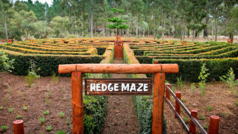 The Hedge Maze at Perth's Outback Splash, Bullsbrook
