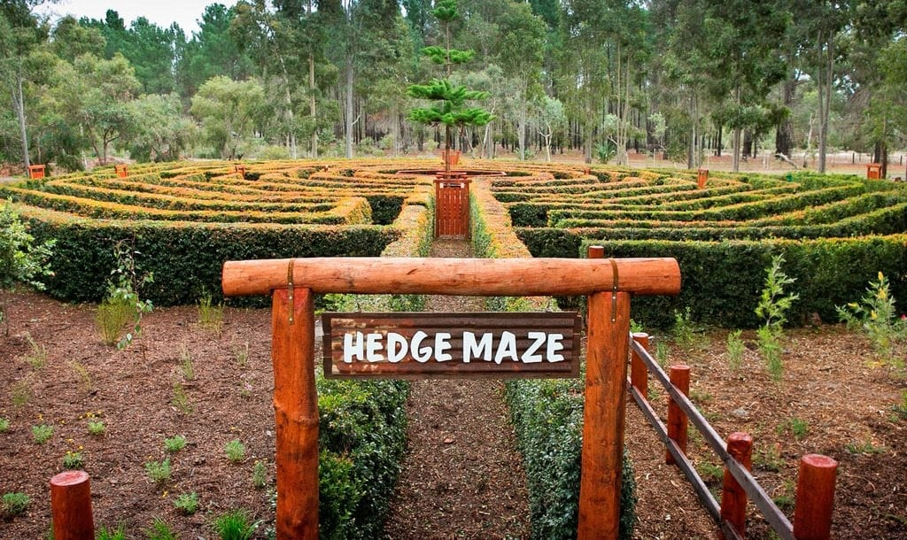 Hedge Maze the maze