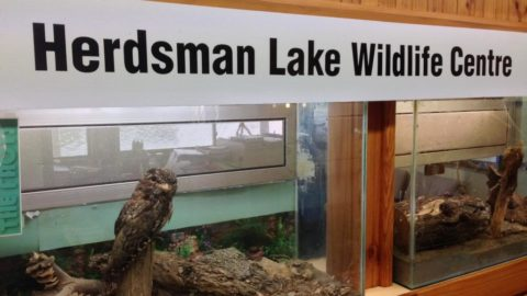 Herdsman Lake Wildlife Centre