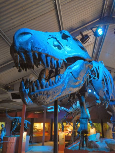 Dinosaur World: Bird and Reptile Park, Denmark