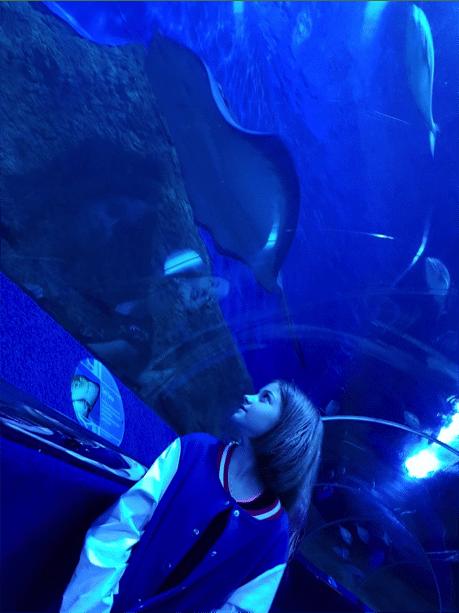 Aqwa Shark Sleepover