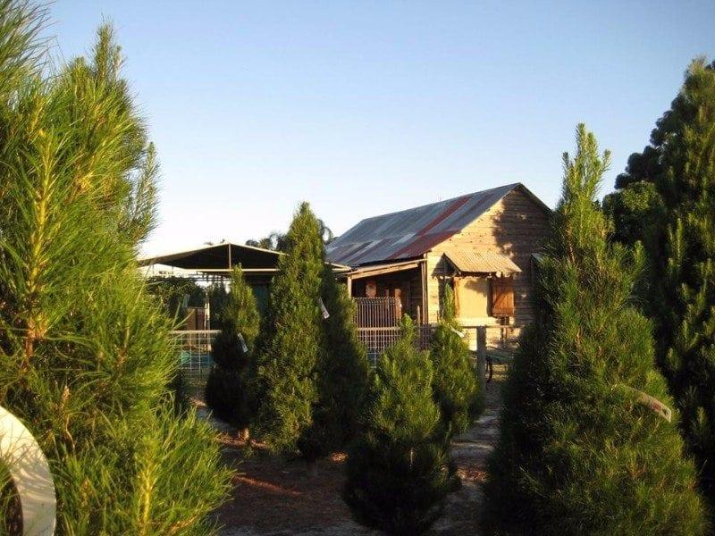Christmas Trees of Wanneroo