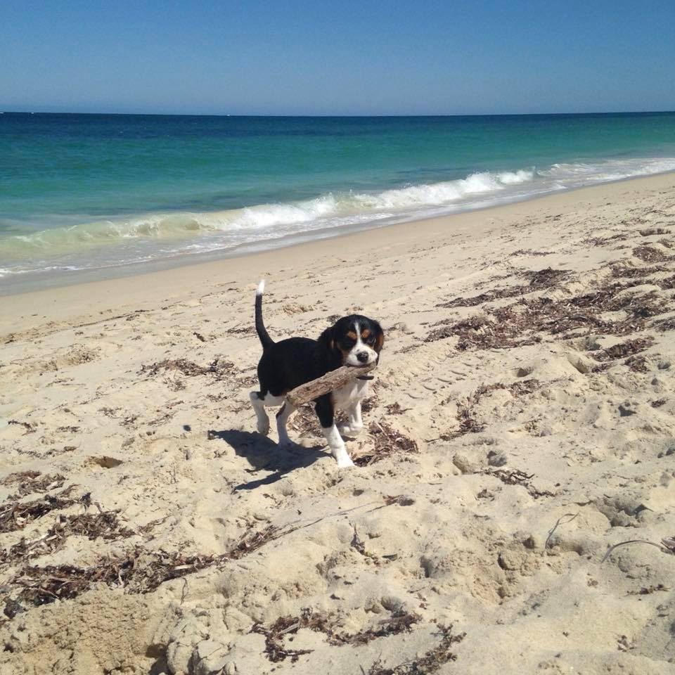 Dog-Friendly Places in Perth