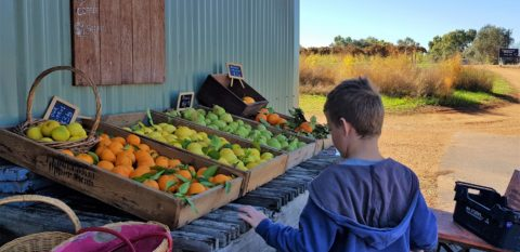 Swan Valley Fresh Seasonal Produce Trail