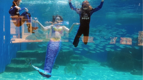 Mermaid Magic at AQWA