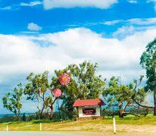 Coalseam Conservation Park – Wildflowers