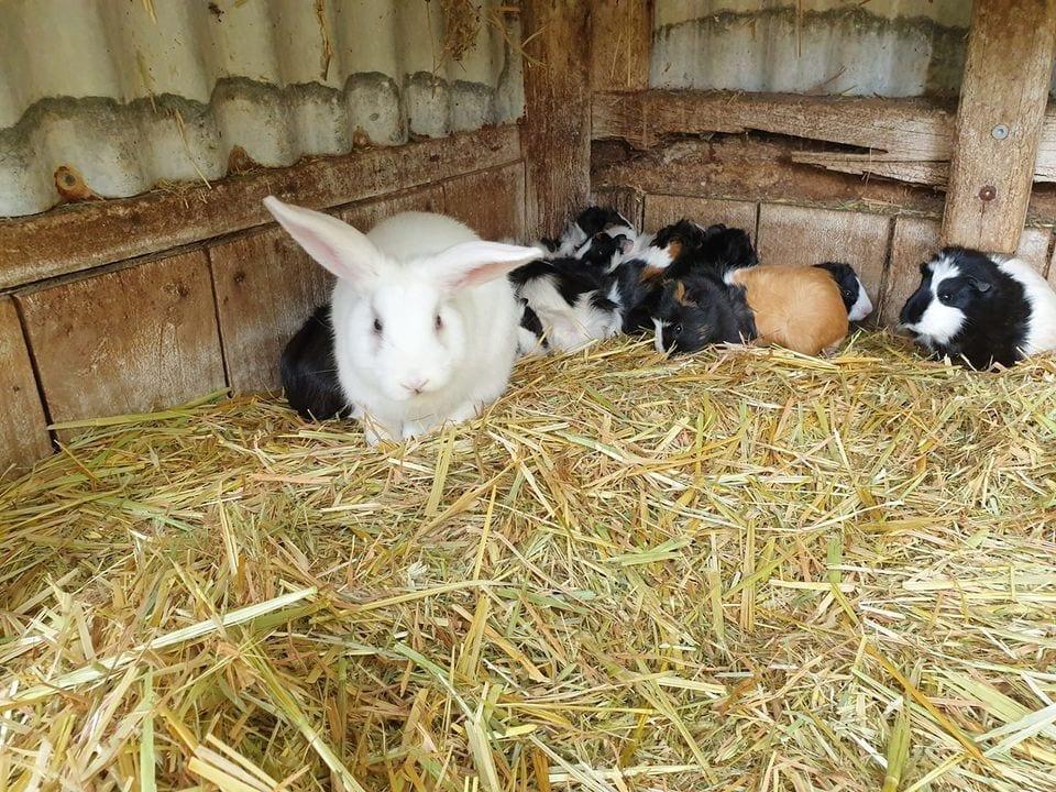 Denmark Animal Farm