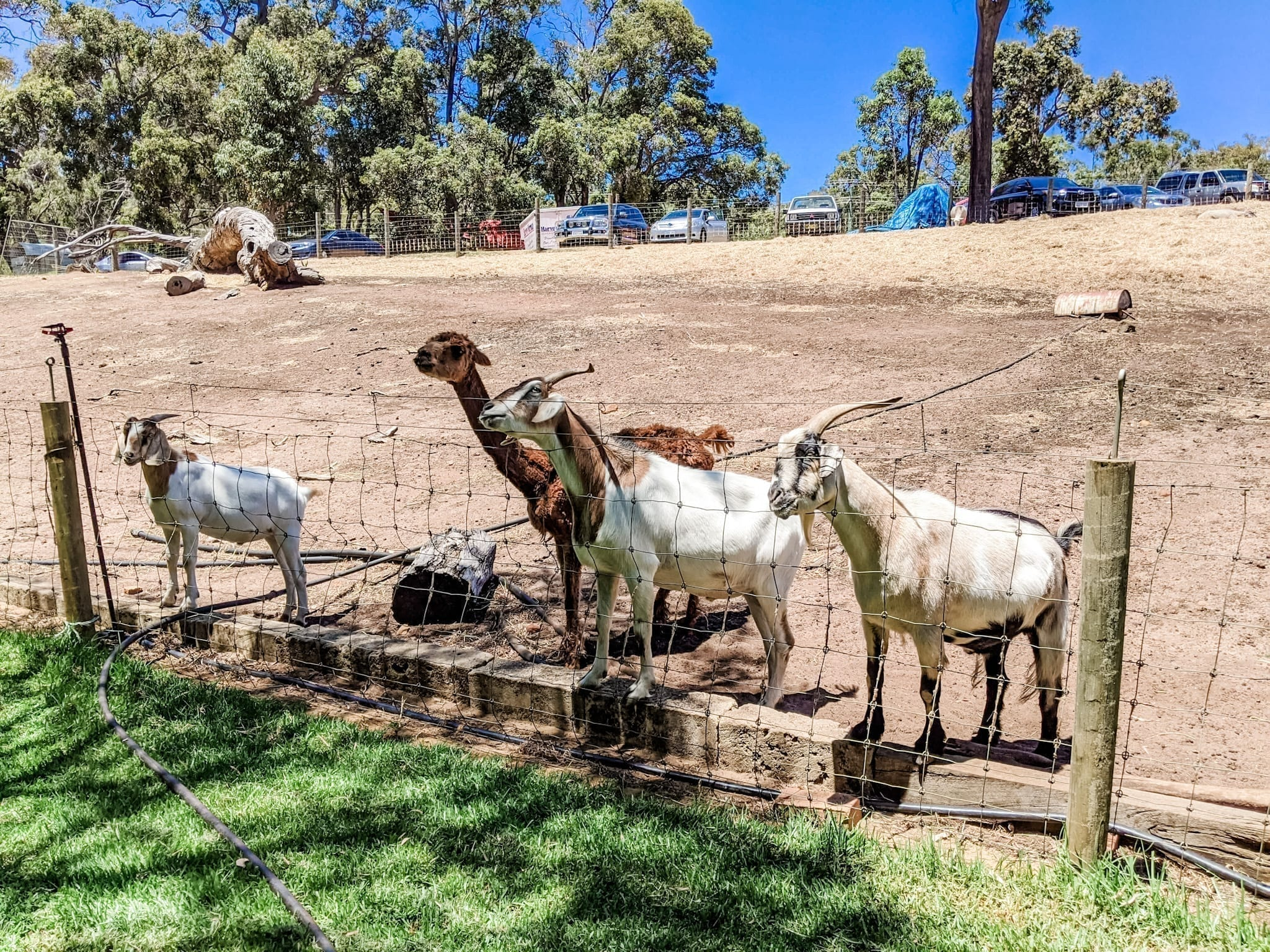 Countrylife Farm, Dunsborough
