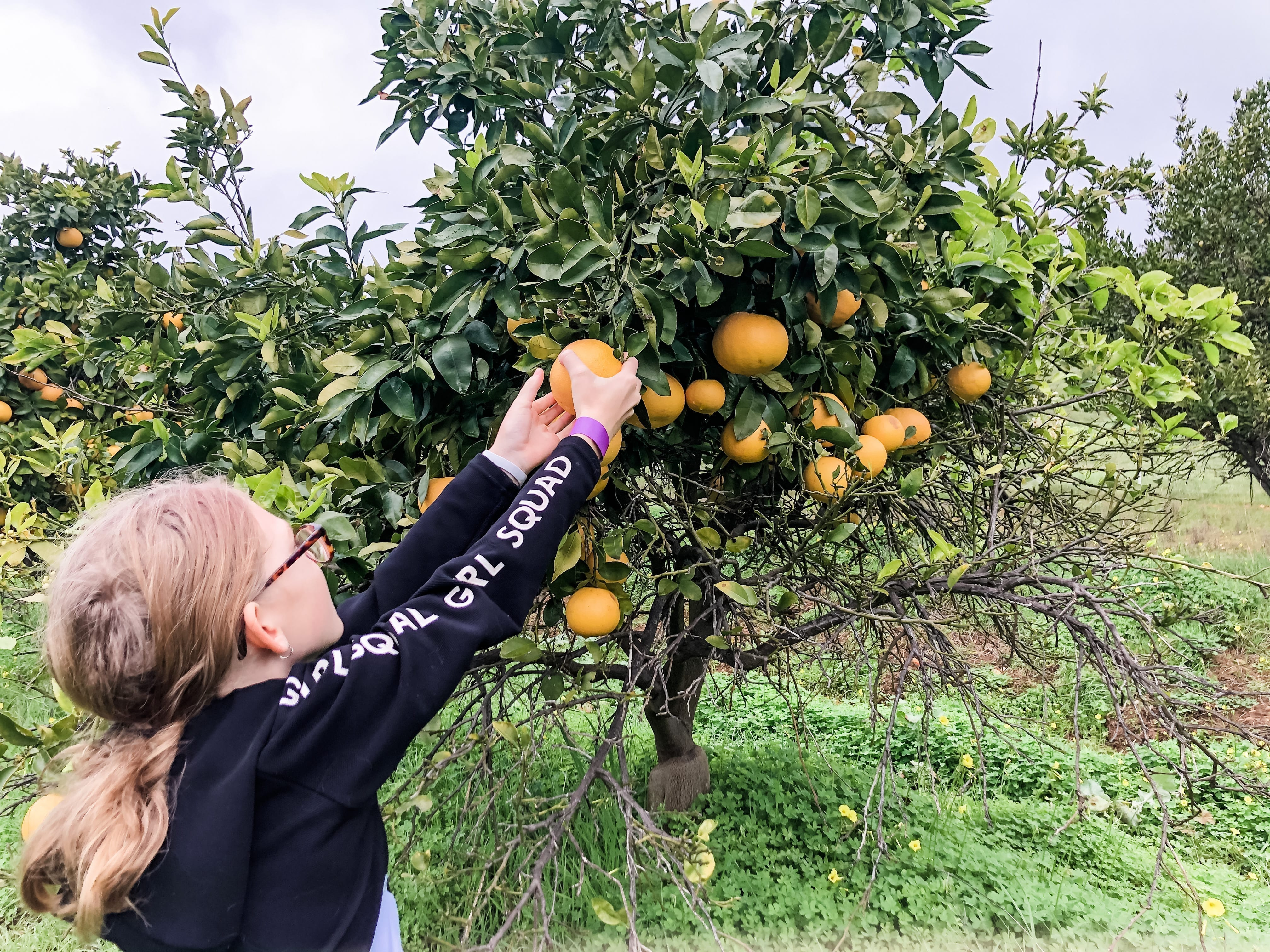 Golden Grove Orchard Chittering