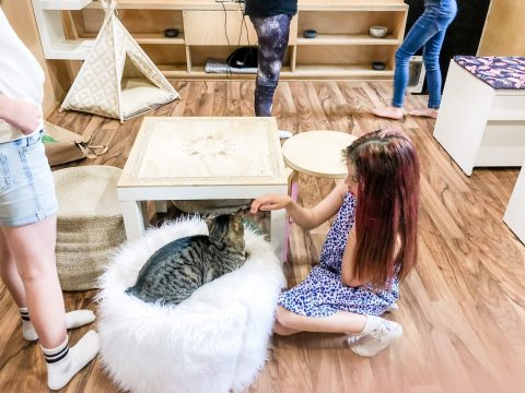 The Cat Cafe Perth Birthday Party