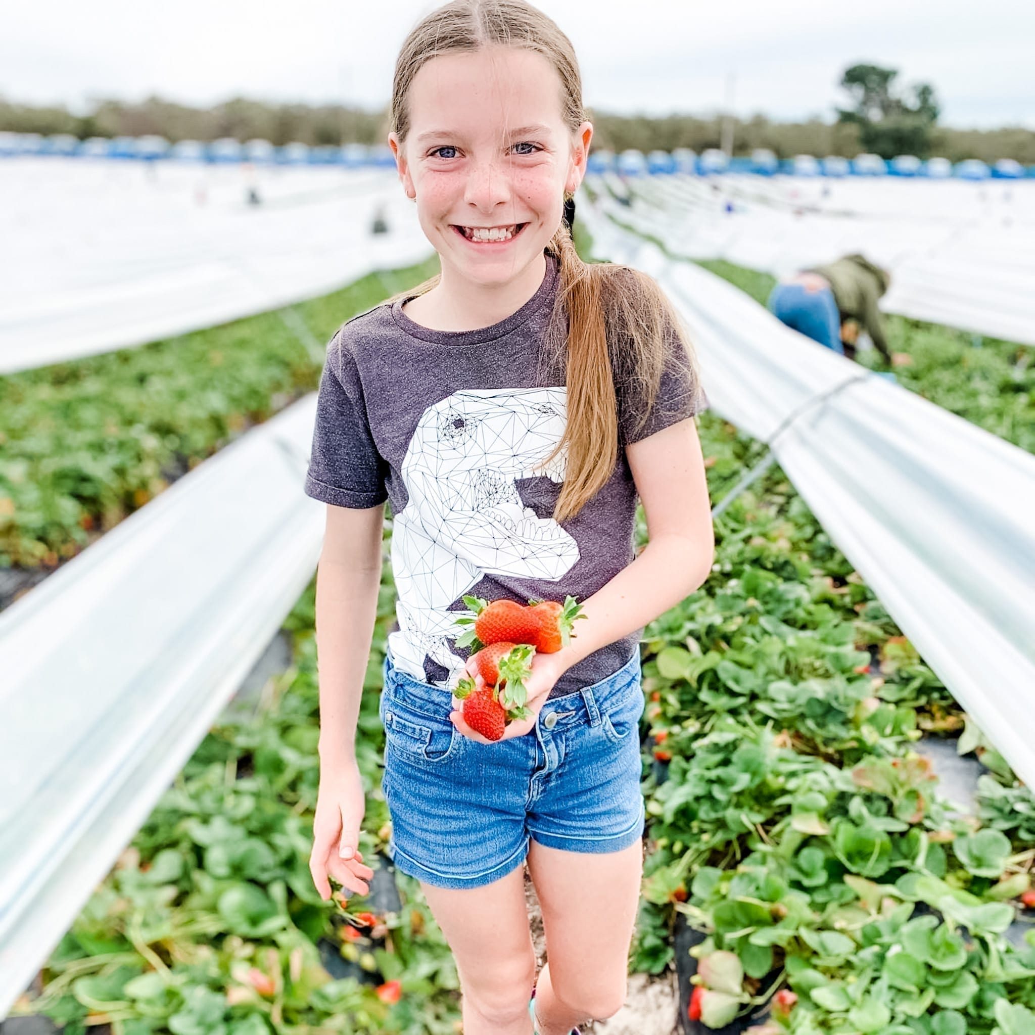 H&N Strawberry Farm