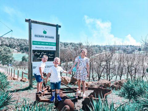Spring at Raeburn Orchards, Roleystone